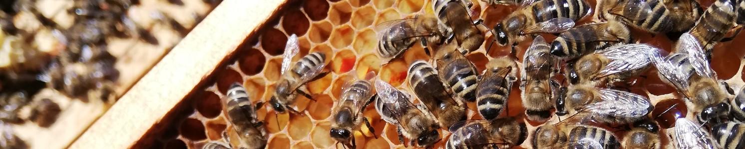 Bienen Frühjahr 2019