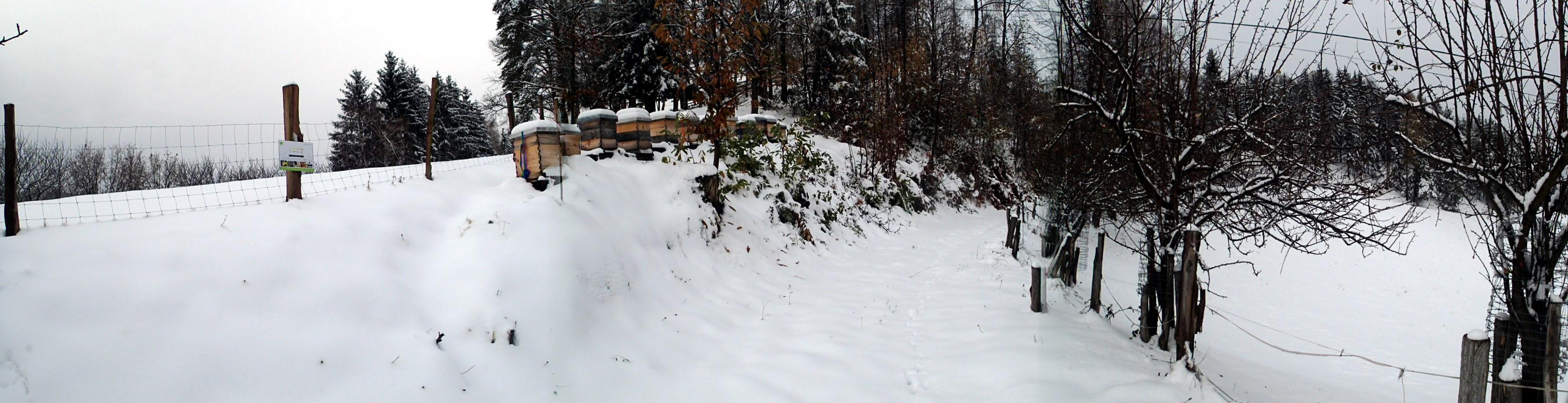 Osterberg Winter 2018_19