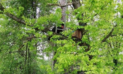 Thomas Waitz beim Aufhängen eines Schwarmfang-Kastens in einer Eiche.